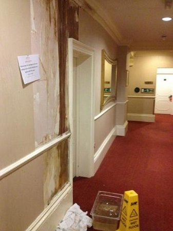 Royal Albion Hotel-Brighton: smelly damp and leaks