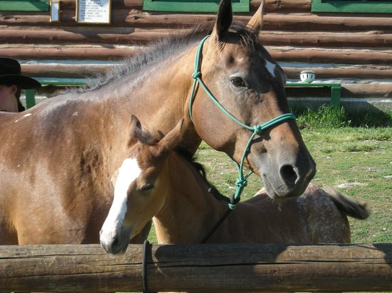 Nine Quarter Circle Ranch: Mother and Baby