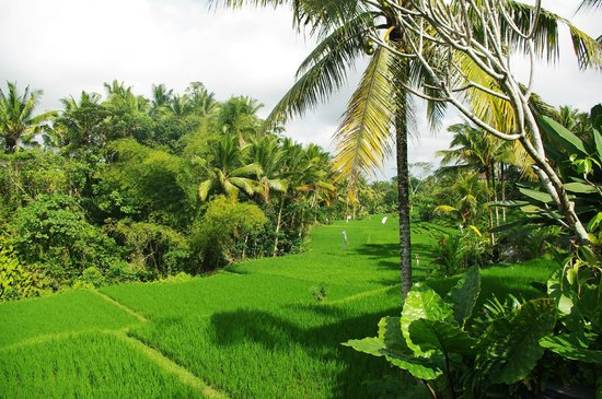 Ubud Green: vue sur les rizires