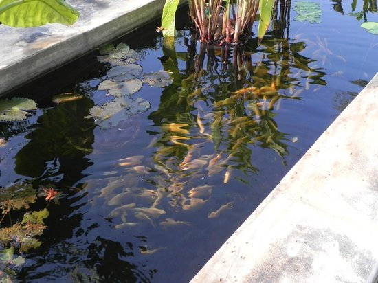 Fish pond for Koi pond india