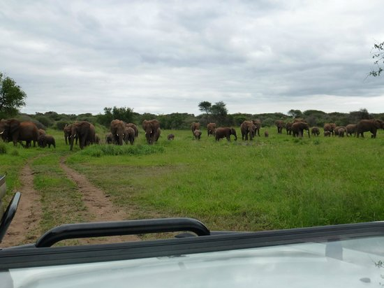 Madikwe River Lodge: Large herd of elephants on the road