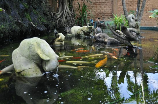 : Fishpond (complete with turtle!)