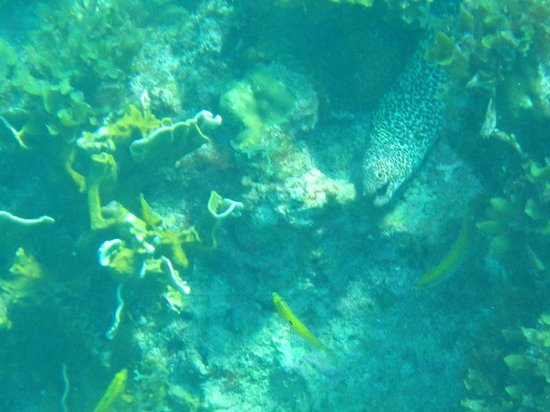 Snorkeling in front of Citronella -- Moray Eel