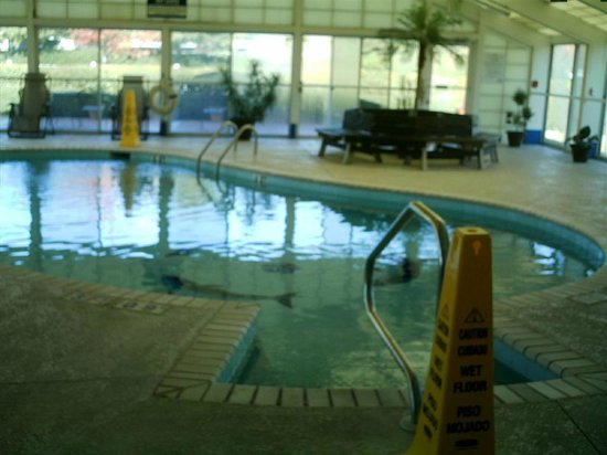 BEST WESTERN PLUS Carlton Suites: Pool area.