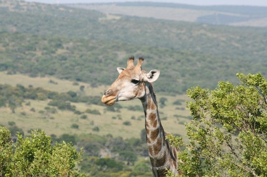 Schotia Safaris Private Game Reserve: Who's there?