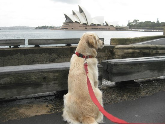Sebel Pier One Sydney: Pet Friendly - close to Opera House