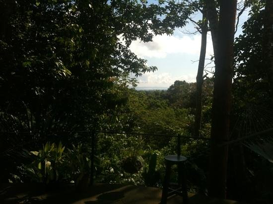 celvante jungle hostel view