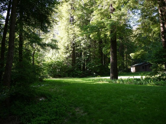 Glen Oaks Big Sur: Open area in front of our cabin