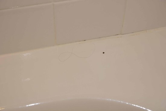 Hyatt Regency Calgary : Found an unexpected hair in the bathtub 