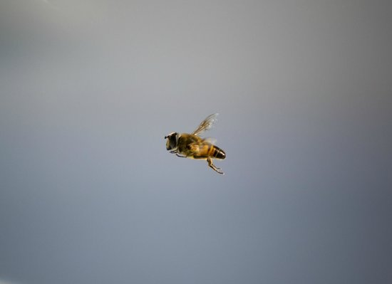 Tin Dragon Trail Cottages: This bee visited our spa each morning to get a little water. He was friendly!