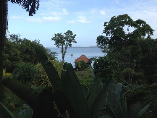 Dolphin Bay Hideaway: the view looking out to sea