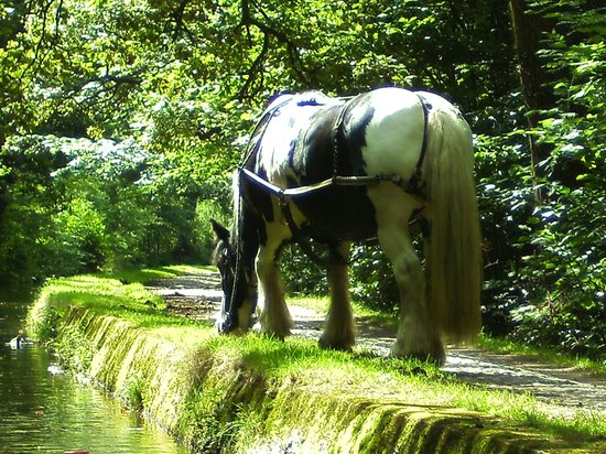 North Wales, UK: Horse resting.