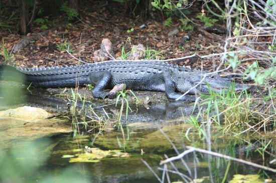 how to get to everglades national park from miami