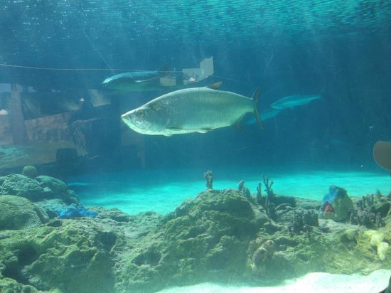 The Tropical at Lifestyle Holidays Vacation Resort: ocean world