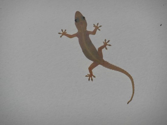 Home Sweet Home Resort: our little friend on the ceiling at the restaurant