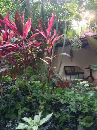 Casa Anjuna: Part of the lovely garden