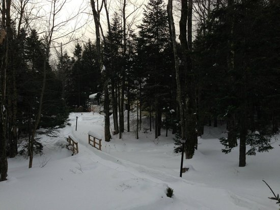 Snow Goose Inn : Snowy Backyard