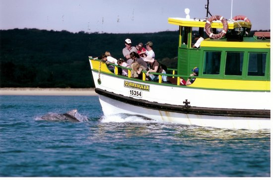 Cronulla & National Park Ferry Cruises: Dolphins love swimming alongside the MV Curranulla