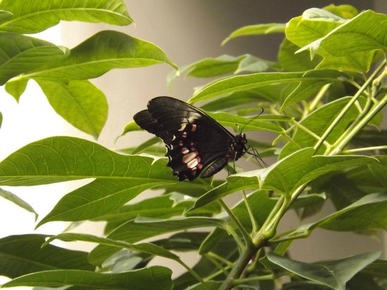 Beautiful Moths Picture Of New Orleans Louisiana