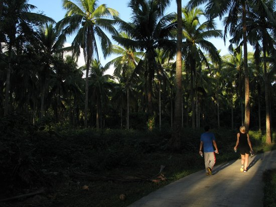 The Farm at San Benito: 4:30pm Power Walk outside the resort grounds