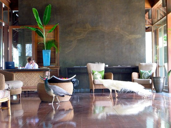 Farm at San Benito: Spa lobby in open pavilion; note the white peacock!