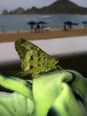 Hacienda Encantada Resort &amp; Spa: fascinating. an unusual amount of moths and little, miniscule inch worms everywhere
