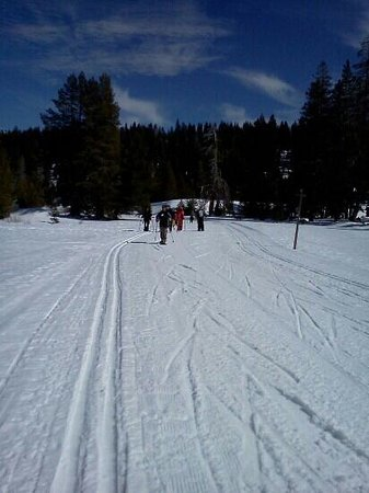 Bear Valley, แคลิฟอร์เนีย: Beautiful bluebird day at BV XC