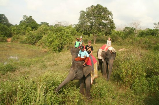 Satwa Elephant Eco Lodge : on the back of an elephant through the fields