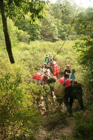 Satwa Elephant Eco Lodge : on the back of an elephant through the bush