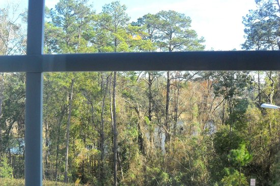 Candlewood Suites Tallahassee: View of natural preserve from suite window