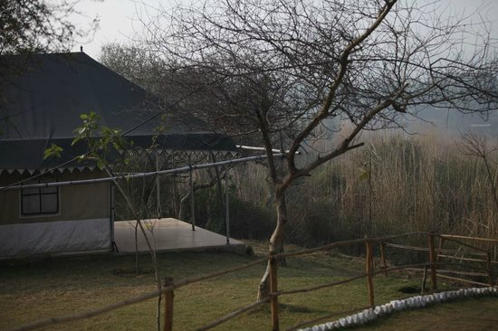 Sohna, India: Swiss Cottage Tents at Kings Jungle