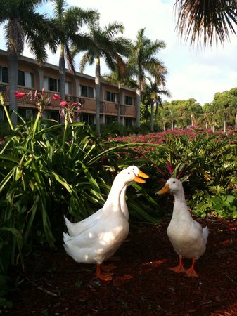 Hollywood Beach Golf Resort: Resort Wildlife