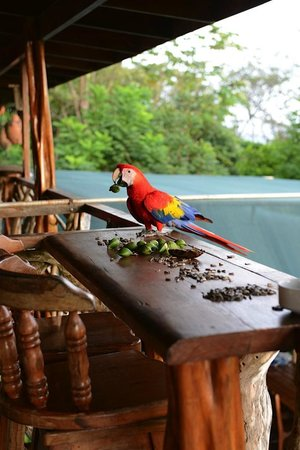 Carate, Costa Rica: Daily visitor