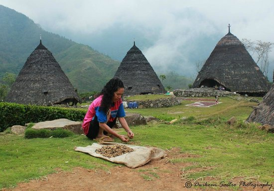 Ruteng, Indonesia: Wae rebo woman drying coffee beans freshly picked.