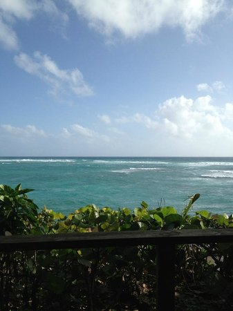 Casa Iguana:                   Breakfast view