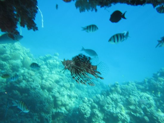 Sharks Bay Umbi Diving Village:                   Pic from snorkelling off the floating jetty! :)