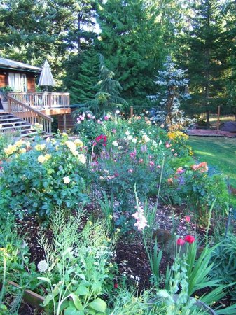 Otters Pond Bed and Breakfast: Explosion of colours and flowers in the gardens