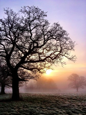Rookery Hall Hotel & Spa:                   Walking through the grounds on a frosty, misty morning.