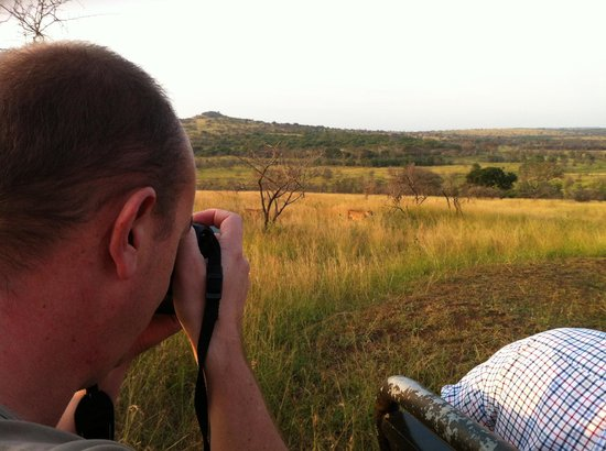 Phinda Private Game Reserve, Sør-Afrika:                   game viewing