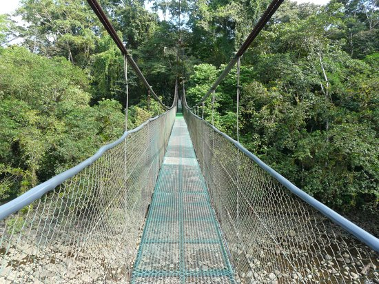 Tirimbina Lodge:                   The suspension bridge
