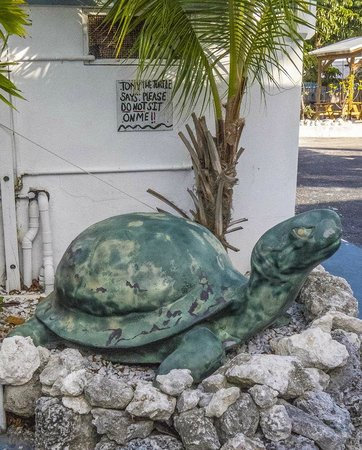 Blue Waters Motel: Friendly turtle