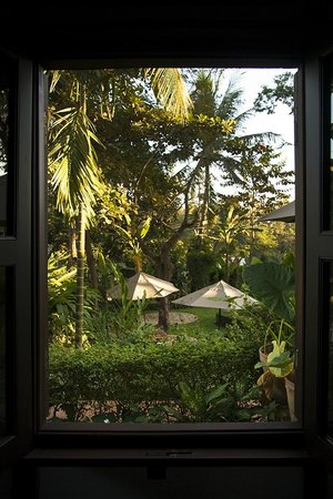 :                   Private garden view from out room.