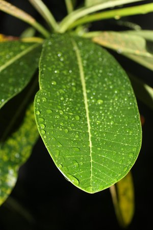 Aonang Phu Petra Resort, Krabi: fresh drops