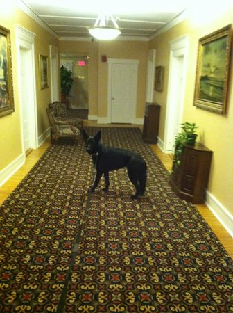 Thayers Inn :                   Dog Friendly