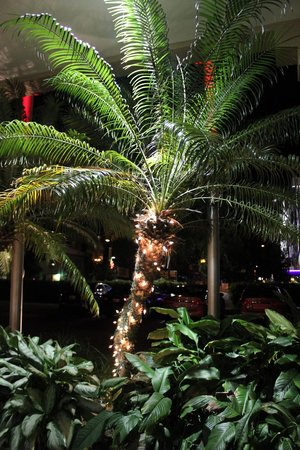 Hampton Inn & Suites San Juan:                   Christmas decorations