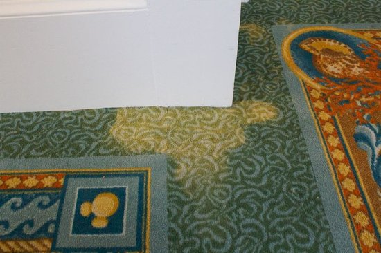 Disney's Beach Club Resort:                   Stained carpet on 4th floor II