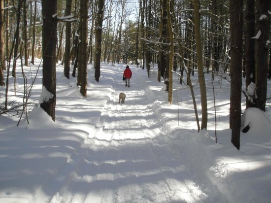 Kingfield, ME: Cross country trails
