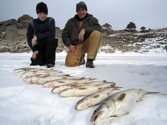 Spring lake trout picture of sport fish colorado for Idaho ice fishing report