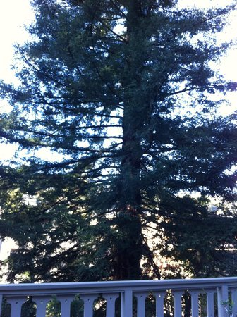 Mill Valley Inn: Redwood