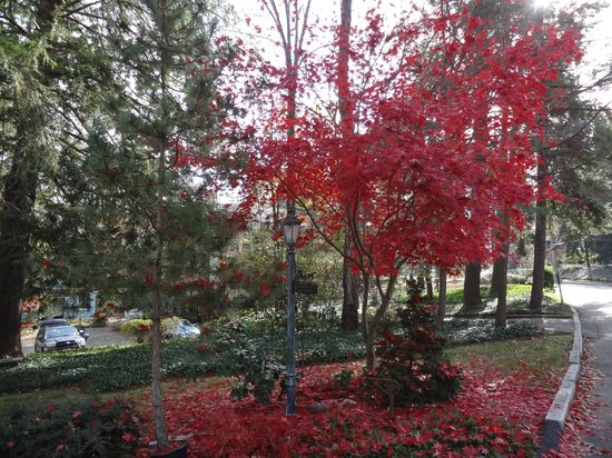 Wright Inn and Carriage House:                   Last of the Fall colours in this magnificent tree at the front entrance